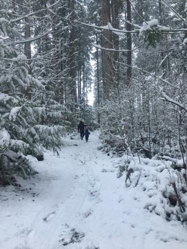 Clearwood Snow