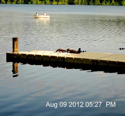 Lake Otters at Longmire